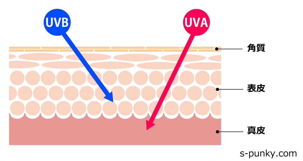 紫外線が肌に侵入する